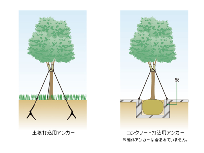 樹木固定用基礎チコーワイヤー支柱